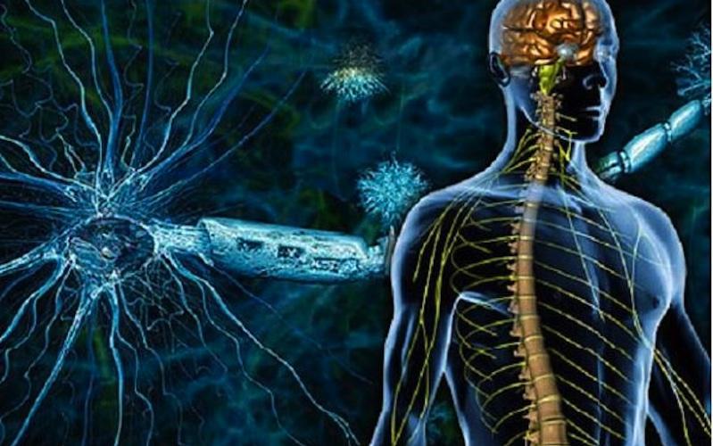 Esklerosi anizkoitzaren elkartearentzat izango da bildutako diru guztia.