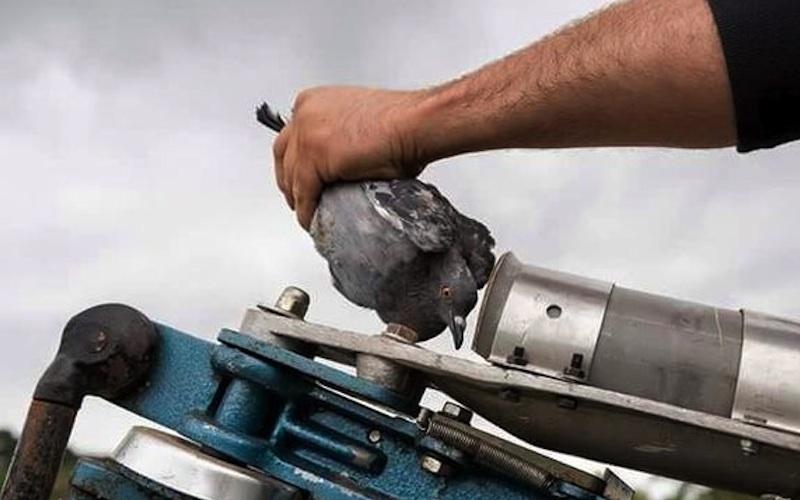 uso eta galeper tiroketa