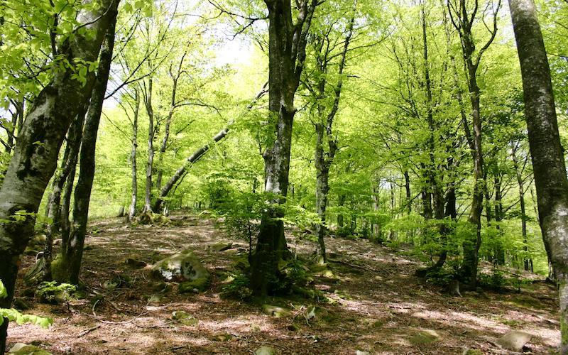 Errenteria, Astigarraga eta Donostiako 600 hektarea hartzen ditu Lau Haizeta parkeak.
