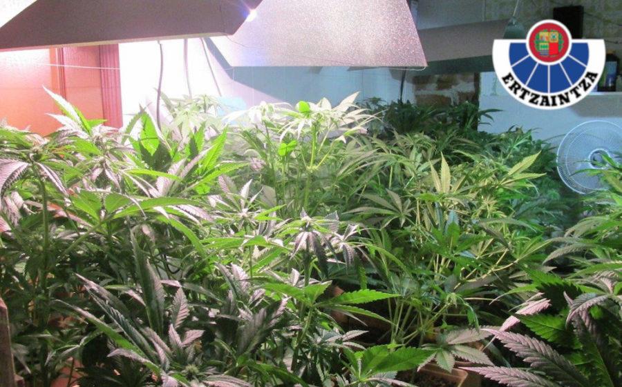 marihuana errenteria